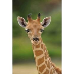 E-tickets instantané  - Zoo de Paris - Billet Enfant CE -  16-08-2019