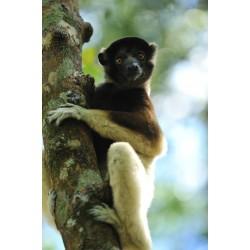 E-tickets instantané  - Zoo de Paris - Billet Jeune CE -  16-08-2019