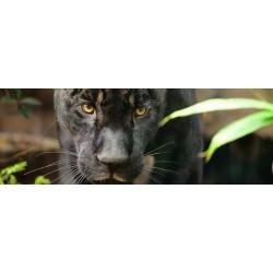 Zoo de Paris - Billet Adulte CE - ACTE COLLECTIVITES