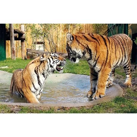 Zoo d'Amneville Adulte 1 Jour - E-billet instantané