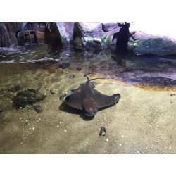 Forfait Zoo d'Amneville et Aquarium 1 Jour - Enfant - E-billet instantané