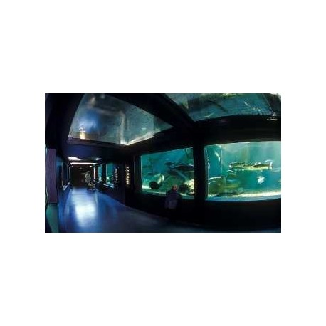 Billet CE Adulte Aquarium Val de Loire