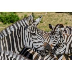 E-billet enfant (de 3 à 9 ans) 1 jour Zoo du bois ATTILLY Saison 2018 ou 2019 (dpt 77 )