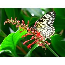 E-billet enfant (de 4 à 12 ans) 1 jour Le Jardin aux Papillons- Saison 2018