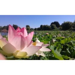 E-billet Parc Floral de la Court D'Aron Adulte - 2019