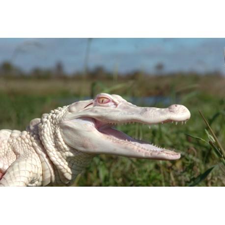 Billet Adulte Ferme aux crocodiles