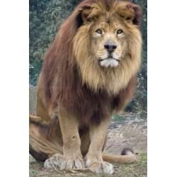 E-ticket (e-billet) - Zoo des Sables d'Olonne - Billet Enfant CE - 2018 ou 2019