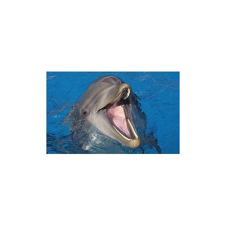 code promo marineland rencontre avec les dauphins Lille