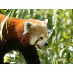 Billet CE Zoo de Thoiry Adulte