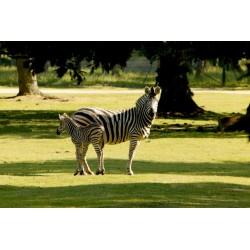 Zoo de Thoiry pas cher - billet Enfant